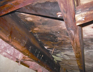 mold and rot in a Tulsa crawl space